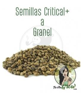 Semillas Critical+ a Granel