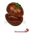 Cenicero Poliresina Seed
