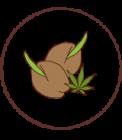 Banco semillas Marihuana